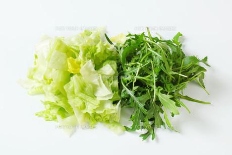 Iceberg lettuce and arugulaの写真素材 [FYI00748772]