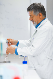 Senior male researcher carrying out scientific research in a lab (shallow DOF  color toned image)の写真素材 [FYI00749107]