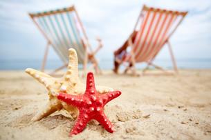 Sea stars on sandの写真素材 [FYI00749842]