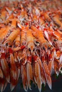 Shrimpsの写真素材 [FYI00750122]