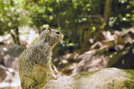 mammalsの素材 [FYI00750156]
