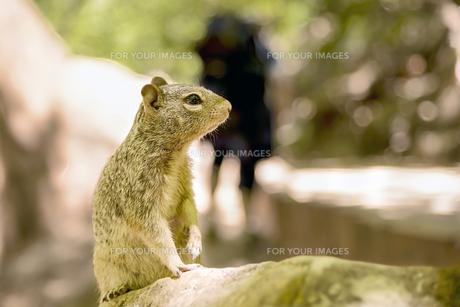 mammalsの素材 [FYI00750158]
