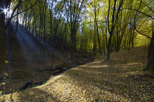 Autumn forestの素材 [FYI00750181]