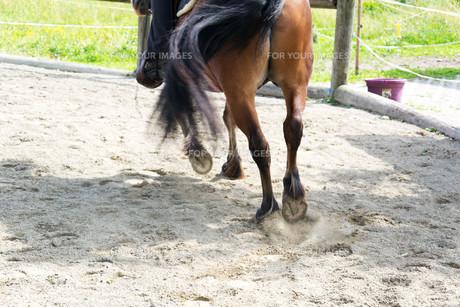 horseの写真素材 [FYI00750384]