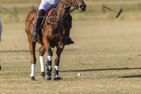 Polo Equestrian Game Actionの素材 [FYI00750398]