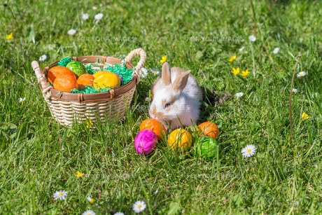 easter bunny with nestの写真素材 [FYI00751010]