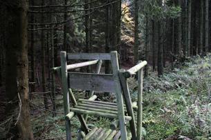 deciduous forestの素材 [FYI00751516]