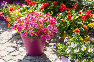 Flower potsの写真素材 [FYI00751967]