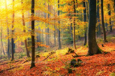 Sunny autumn forestの素材 [FYI00752615]