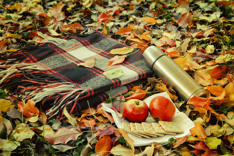 A convenient blanket to relax in the woods and Breakfast.の写真素材 [FYI00752714]