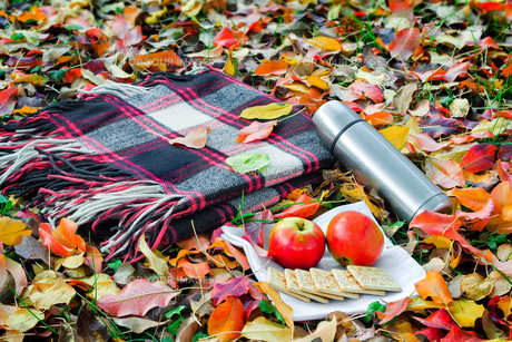 A convenient blanket to relax in the woods and Breakfast.の写真素材 [FYI00752717]