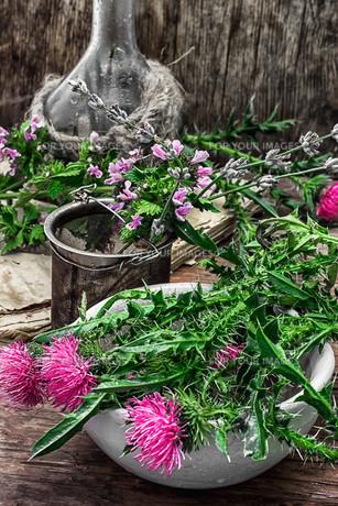 plants_flowersの素材 [FYI00752734]