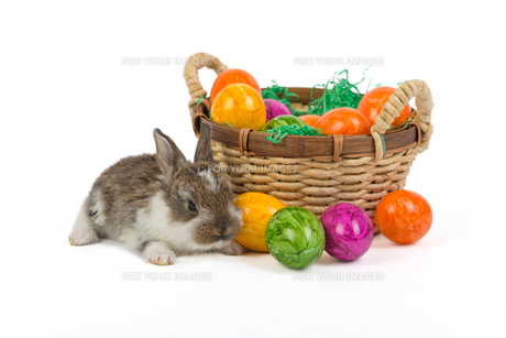 easter bunny with nestの写真素材 [FYI00753015]