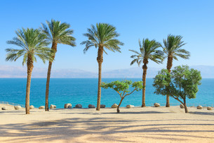 Scenery of Dead Sea with palm trees on sunshine coastの写真素材 [FYI00753061]