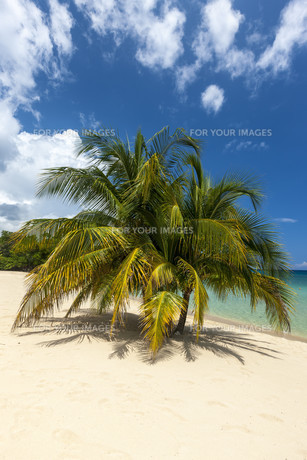Beach on tropical island. Clear blue water, sand, palms.の写真素材 [FYI00753116]