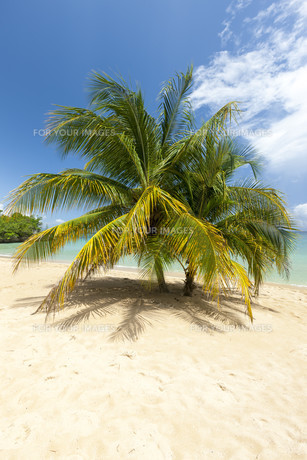 Beach on tropical island. Clear blue water, sand, palms.の写真素材 [FYI00753118]