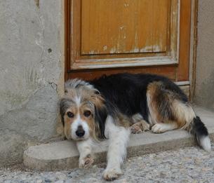 dog guards the front doorの写真素材 [FYI00753313]