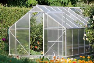 greenhouse with tomato plantsの写真素材 [FYI00753955]