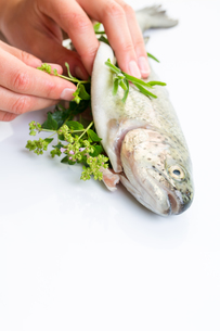 Female chef's hands stuffing a freshly cought trout with fresh herbsの写真素材 [FYI00754014]