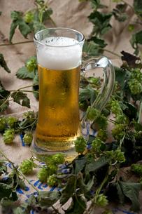 beer in mug on hopsの写真素材 [FYI00754105]