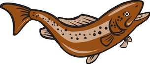 Brown Spotted Trout Jumping Cartoonの写真素材 [FYI00754165]