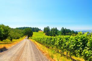 Vineyard in Rural Oregonの写真素材 [FYI00754376]