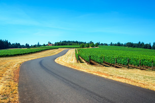 Road through a Vineyardの写真素材 [FYI00754384]