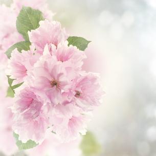 plants_flowersの素材 [FYI00754408]