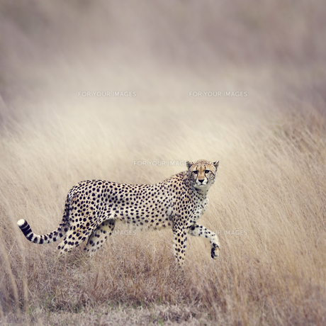 animalsの写真素材 [FYI00754414]
