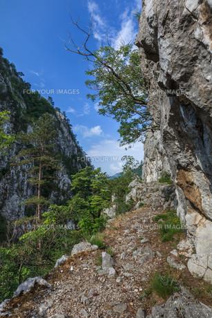 Tasnei Gorge, Romaniaの写真素材 [FYI00754464]