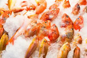 Fresh fish in wet marketの写真素材 [FYI00754804]