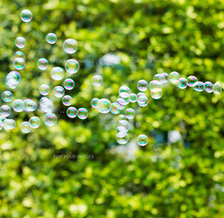Rainbow bubbles from the bubble blowerの素材 [FYI00754812]