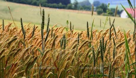 grass_fieldsの素材 [FYI00755623]