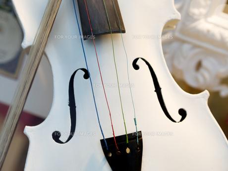 White violinの素材 [FYI00755897]