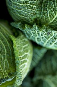 Cabbageの写真素材 [FYI00756780]