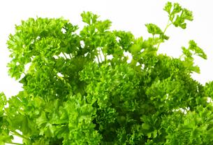 Fresh parsleyの写真素材 [FYI00756854]