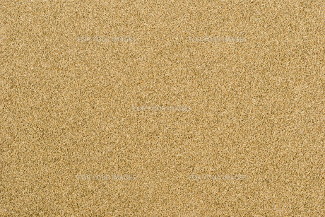 Thymol seeds (ajwain)の写真素材 [FYI00756906]