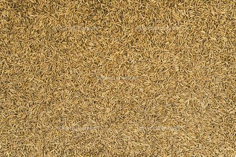 Dried cumin seeds (jeera)の写真素材 [FYI00756907]