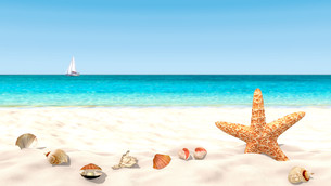 Shells and starfish on a sandy beach with a blurred background in order to focus on the foreground.の写真素材 [FYI00757430]