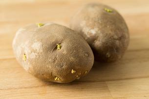 Germinating potatoの写真素材 [FYI00757496]