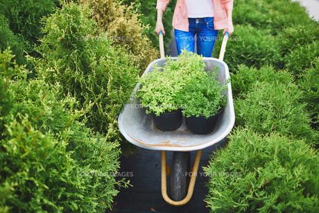 Carrying green seedlingsの素材 [FYI00757641]