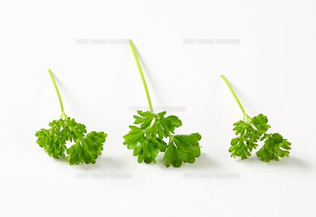 Fresh parsley sprigsの写真素材 [FYI00757891]