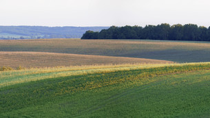 Agricultural fieldの写真素材 [FYI00758247]