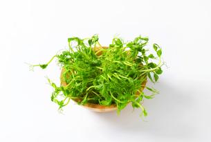 Green pea shootsの写真素材 [FYI00758485]