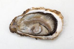 Open Oysterの写真素材 [FYI00758678]