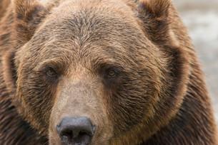Bear 3の写真素材 [FYI00758894]