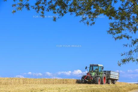 cornfieldの写真素材 [FYI00758906]