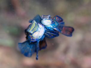 fishes_crustaceansの写真素材 [FYI00758910]