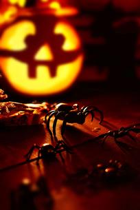 Halloween horrorの素材 [FYI00759784]