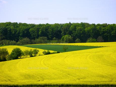 landscape in kraichgauの写真素材 [FYI00760295]
